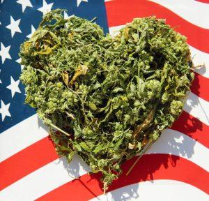 Home - Cannabis Corner Chat Room
